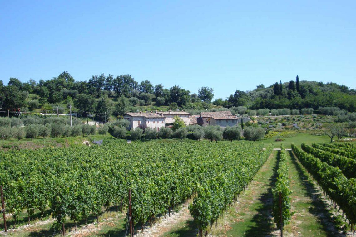 Weingut Bardolino zum Verkauf mit schönem Seeblick 04