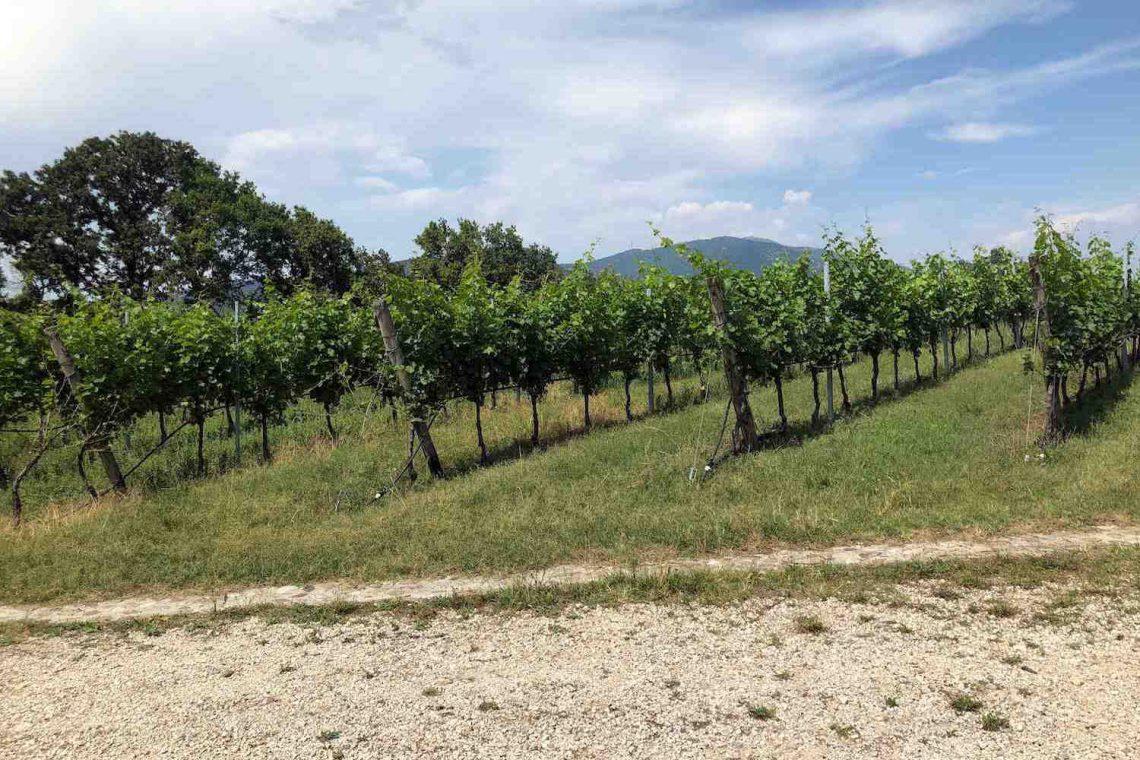 Baugrundstück Garda mit Seeblick 07