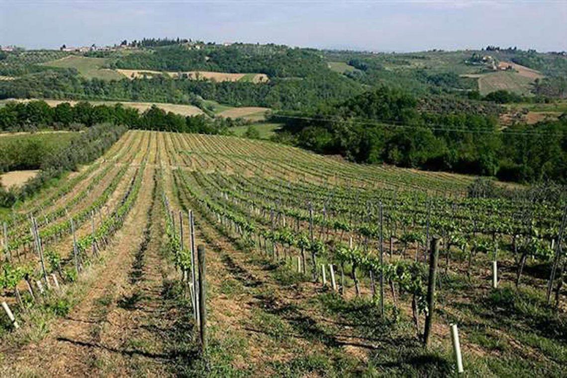 Weingut in Chianti zu verkaufen 05